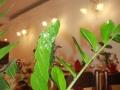 ristorante-da-bruno-venezia-3